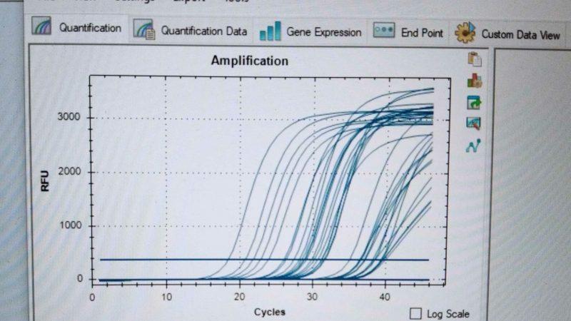 PCR test readout